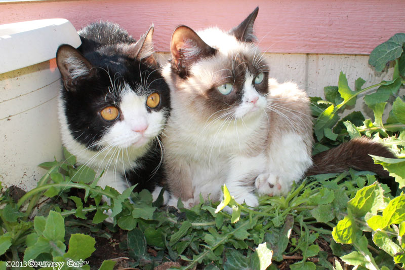 adore these cats  What   s that  One more Tardar Sauce